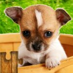 Dogs Jigsaw Puzzles Game – For Kids & Adults 🐶 26.3 (MOD, Unlimited Money)