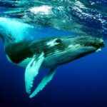 The Humpback Whales 1.0.2 (MOD, Unlimited Money)