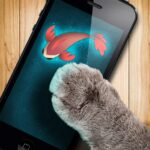 Fish game toy for cats  (MOD, Unlimited Money) 1.31